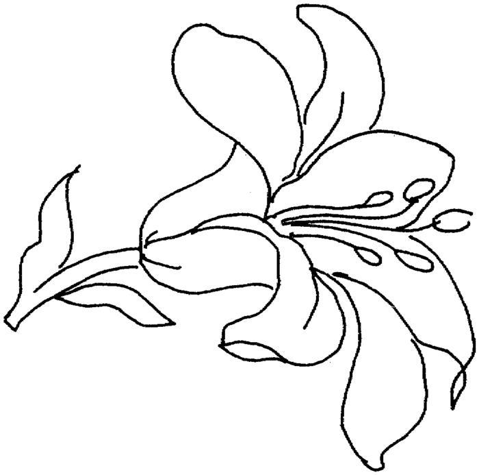 Трафарет цветка Распечатываем раскраски цветы бесплатно