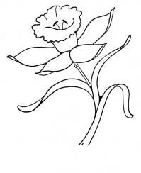 Цветы нарциссы цветы раскраски онлайн бесплатно