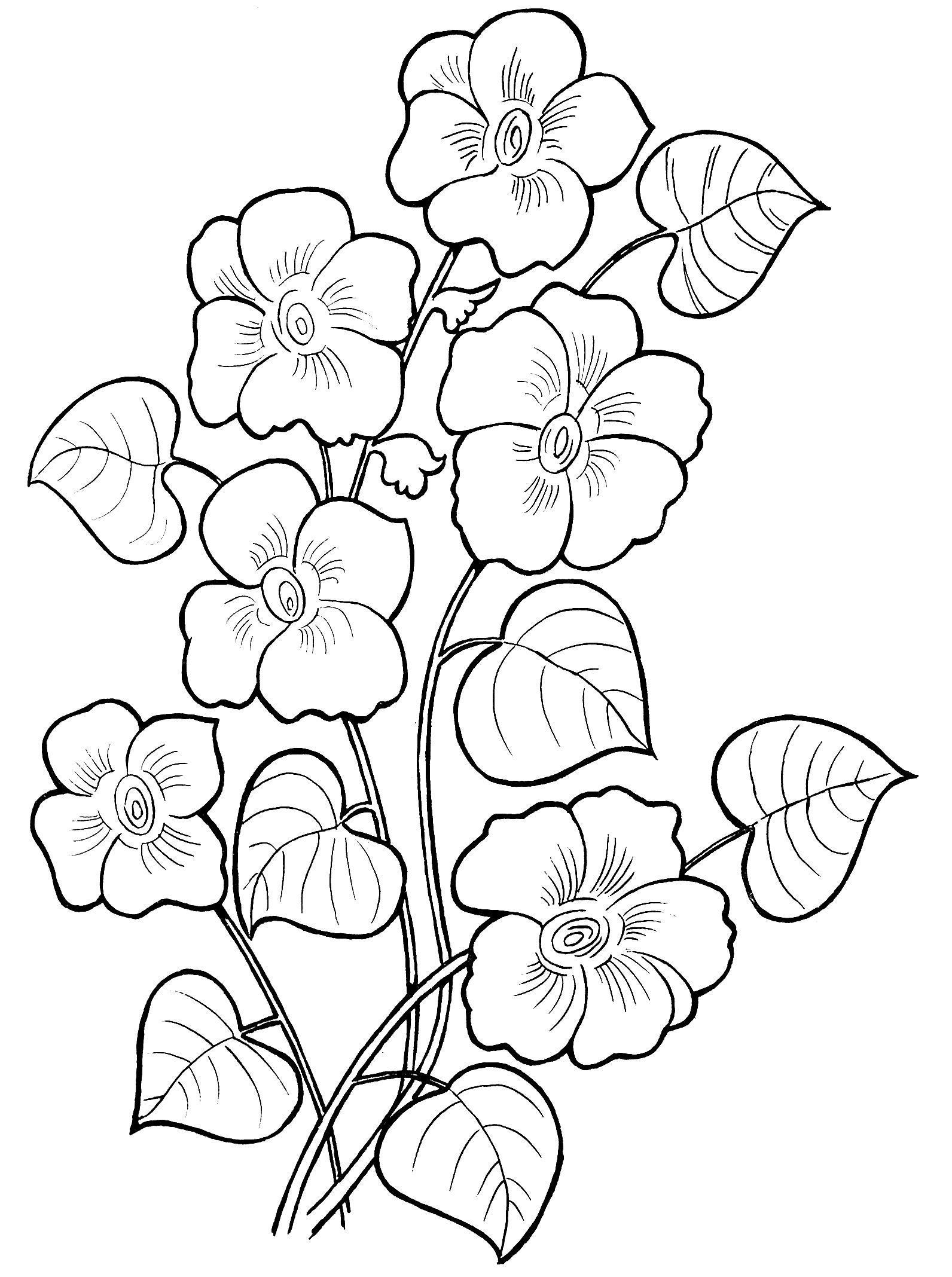 Полевые цветы Полевые цветы Галерея раскрасок с цветами онлайнраскраски цветы