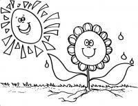 Цветы подсолнух под солнцем Фото раскраски цветы