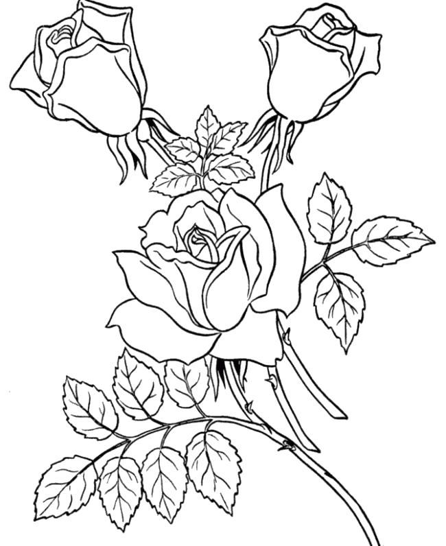Три розы Раскраска цветок для скачивания