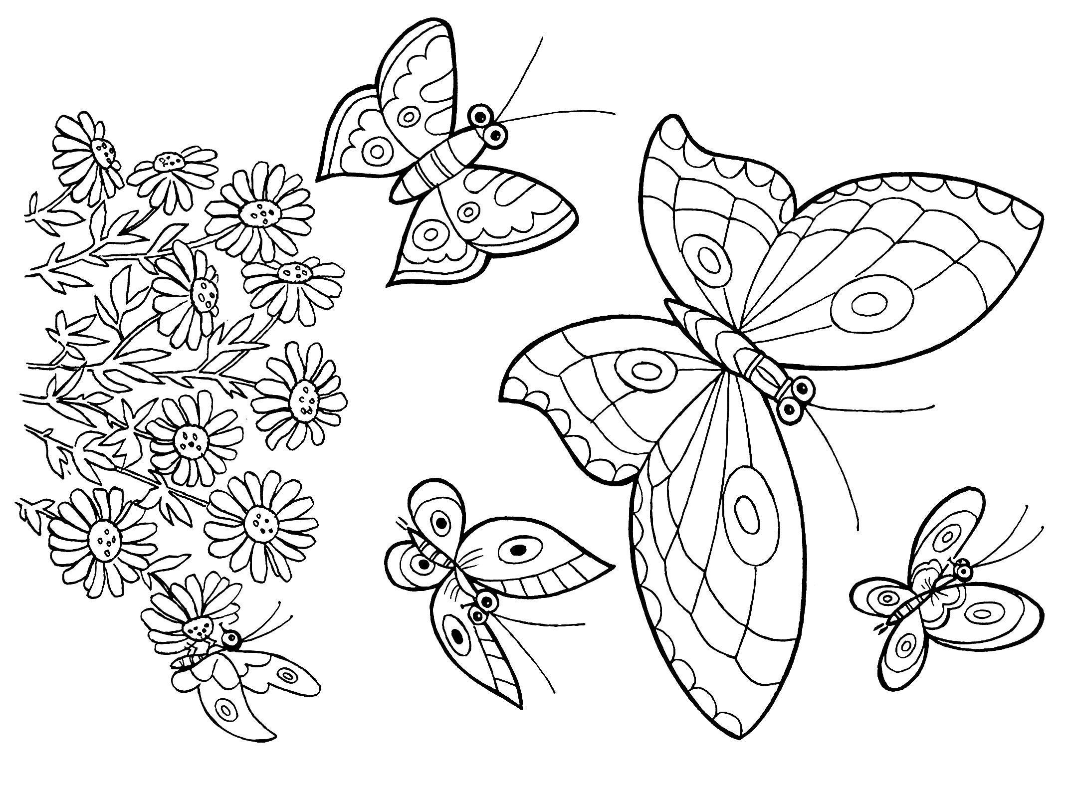 Бабочка Цветочки ромашки и много бабочек Новые раскраски цветыраскраски цветы