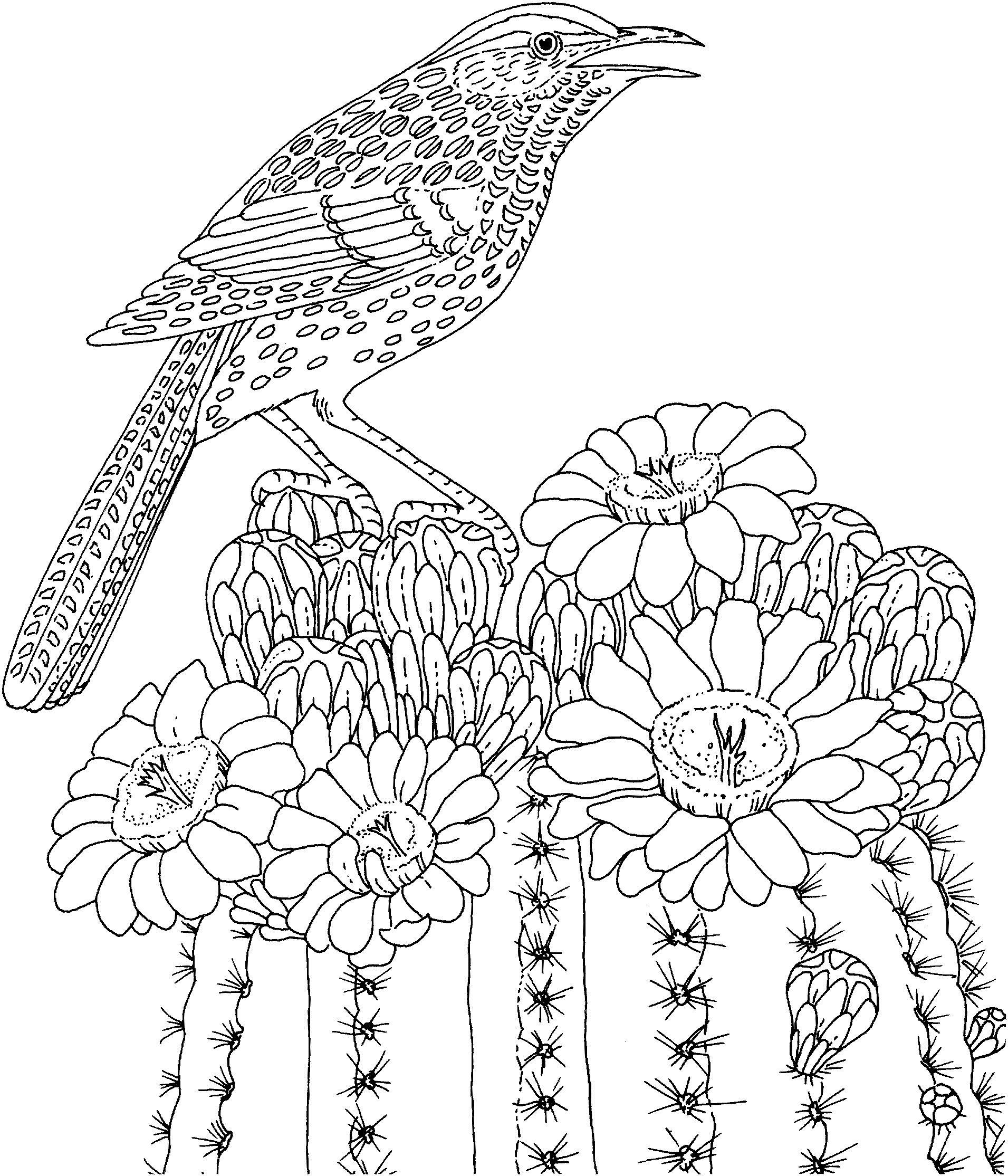 Птица Сложные птица на кактусе Новые раскраски с цветамираскраски цветы