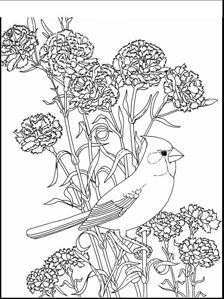 Птица в гвоздиках Новые раскраски цветы