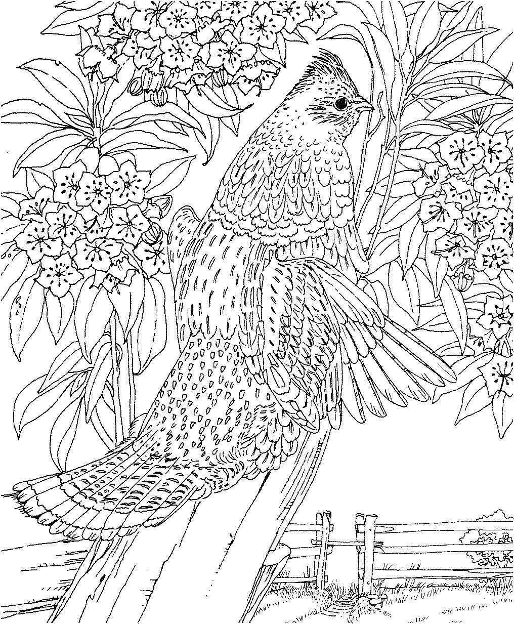 Птица Сложные, птица на цветущей ветке Галерея раскрасок с цветами онлайнраскраски цветы