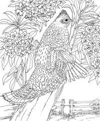 Сложные, птица на цветущей ветке Раскраски с цветами распечатать бесплатно