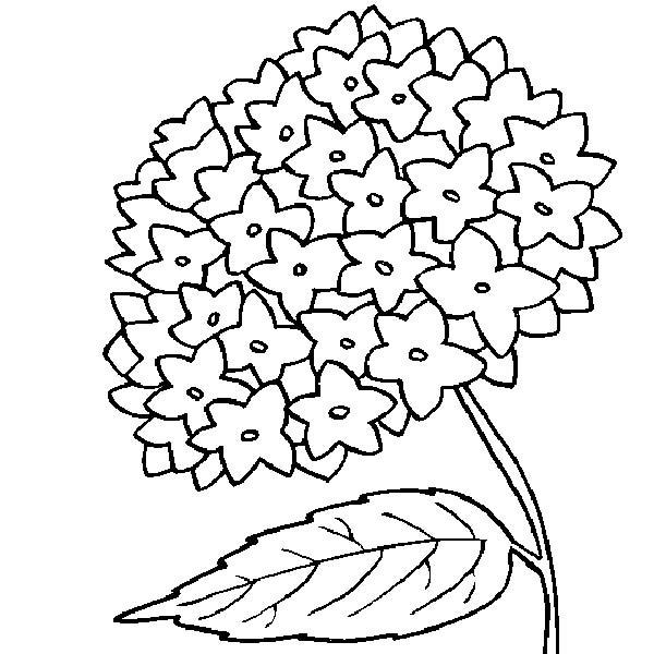 Сложные маленькие цветочки Раскраски цветов скачать