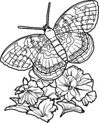 Сложные цветы с бабочкой цветы раскраски онлайн бесплатно