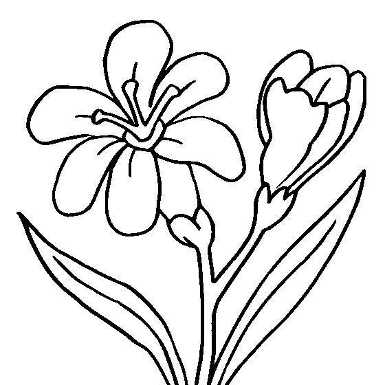 Цветы с бутонами цветы раскраски онлайн бесплатно
