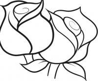 Цветы нераскрывшиеся розы Раскраски с цветами распечатать бесплатно