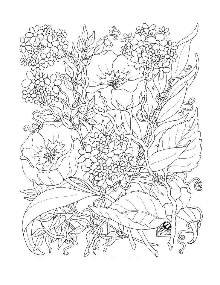 Цветы заросли цветов, маки Раскраски с цветами распечатать бесплатно