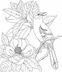 Цветы, птица на шиповнике Раскраски с цветами распечатать бесплатно