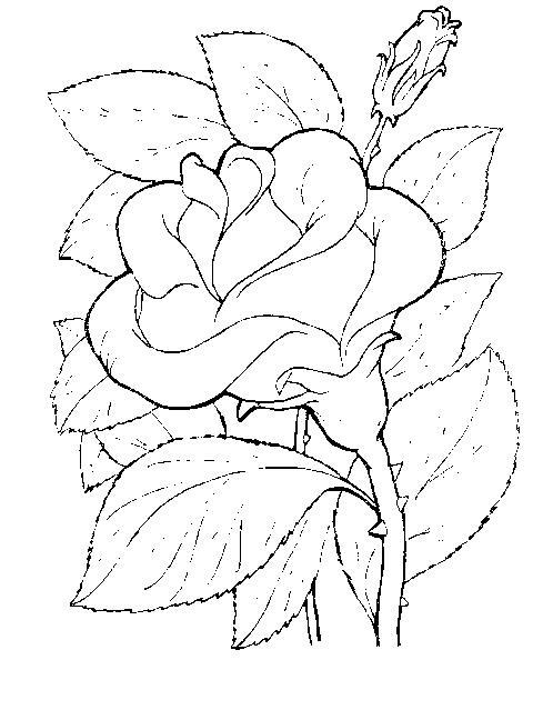 Цветы роза с шипами Раскраски с цветами распечатать бесплатно