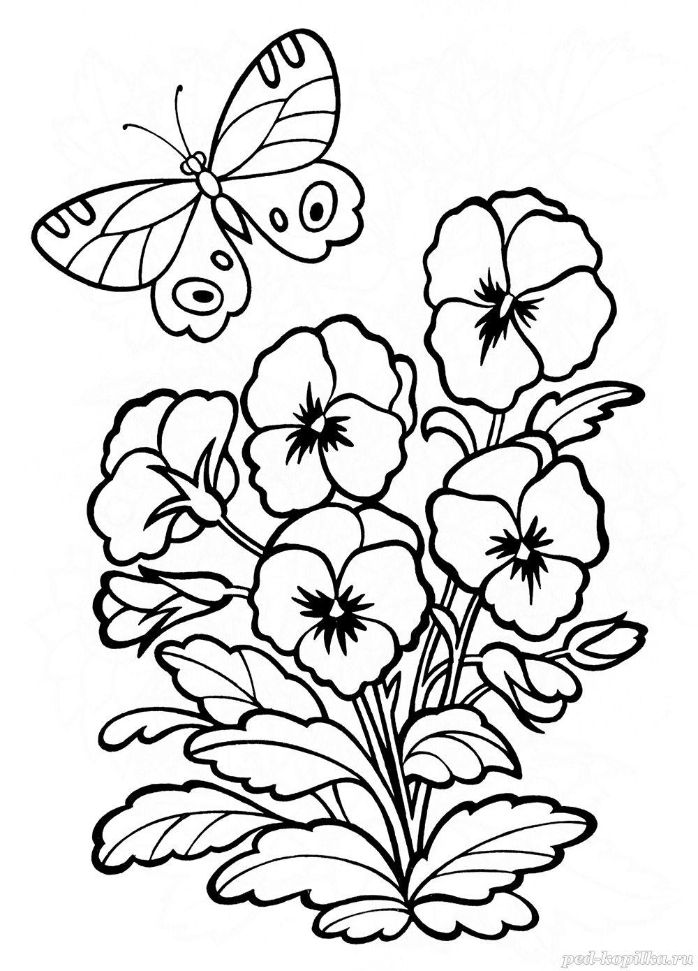 Весенние цветы, анютины гзалазки Новые раскраски цветы