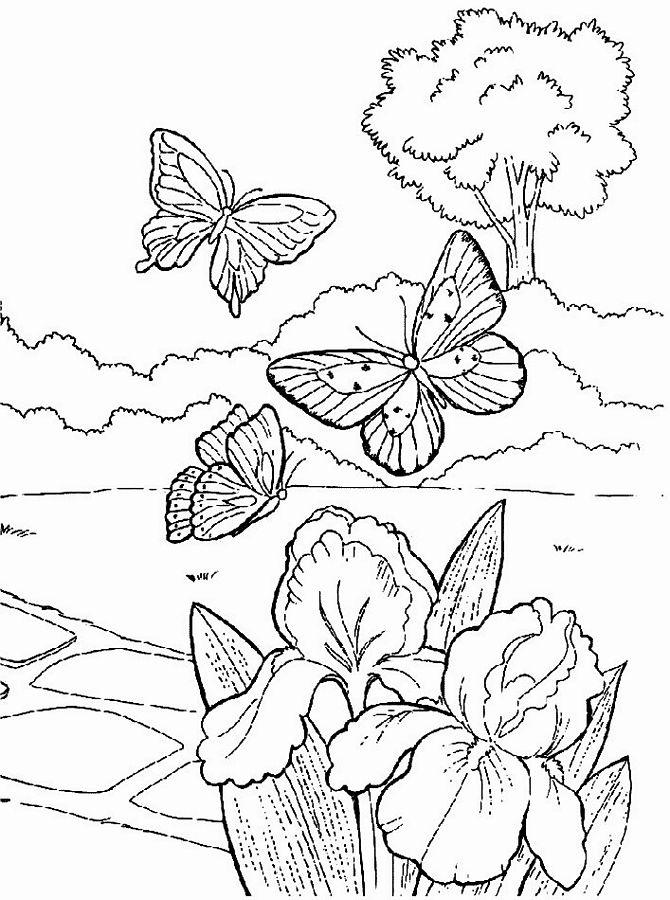 Весенние цветы ирисы в поле Картинки раскраски цветы