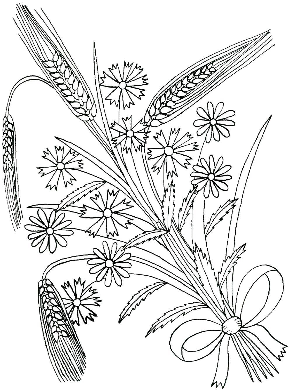 Летние цветы с колосками пшеницы Раскраски с цветами распечатать бесплатно