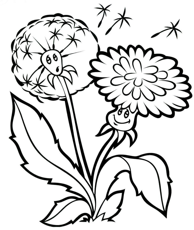 Летние цветы, одуванчик Фото раскраски цветы