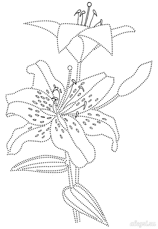 Летние цветы, ветка лилии Разукрашки цветы