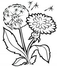 Летние цветы, одуванчик