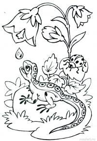 Летние цветы, капля росы, ящерица Раскраски с цветами распечатать бесплатно
