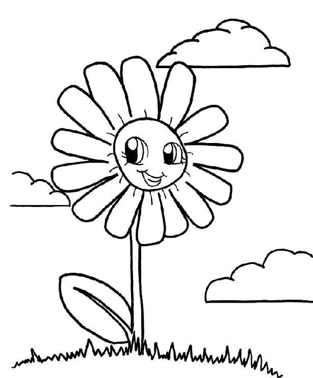 Ромашка Фото раскраски цветы