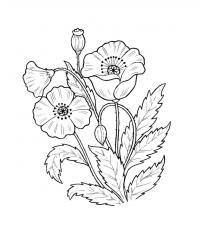 Раскраски растения детская раскраска растения,  цветы