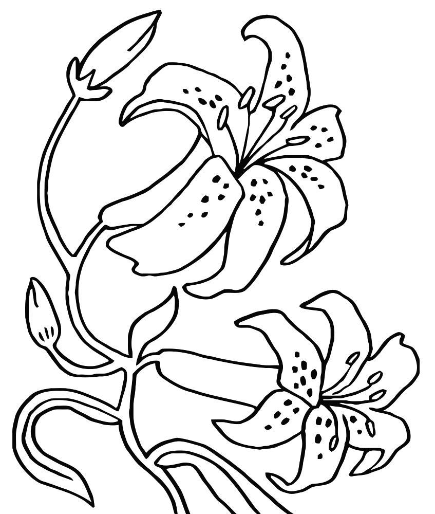 Раскраски цветка лилии