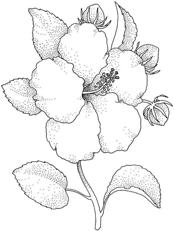 Цветок Раскраски цветы скачать