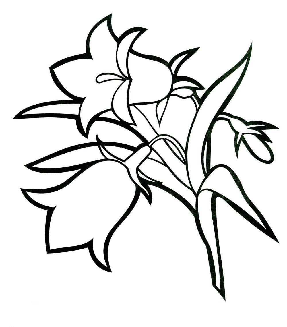 Полевые цветы Колокольчик Новые раскраски цветыраскраски цветы