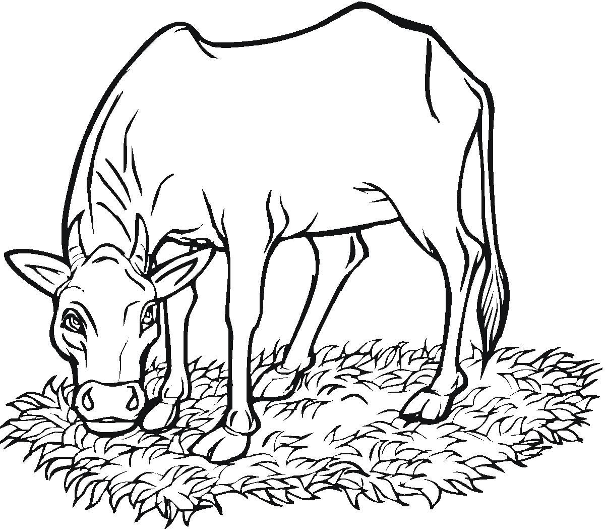 Корова на лугу жует газон Раскраски с цветами распечатать бесплатно