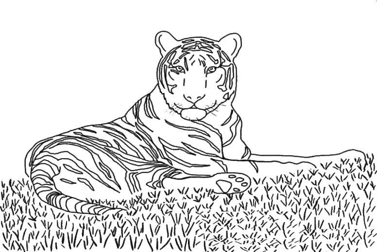 Тигр отдыхает на траве Раскраски цветочки для детей бесплатно