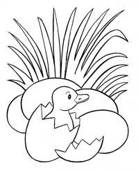Цыпленок вылупился в траве из яйца Раскраски цветочки для детей бесплатно