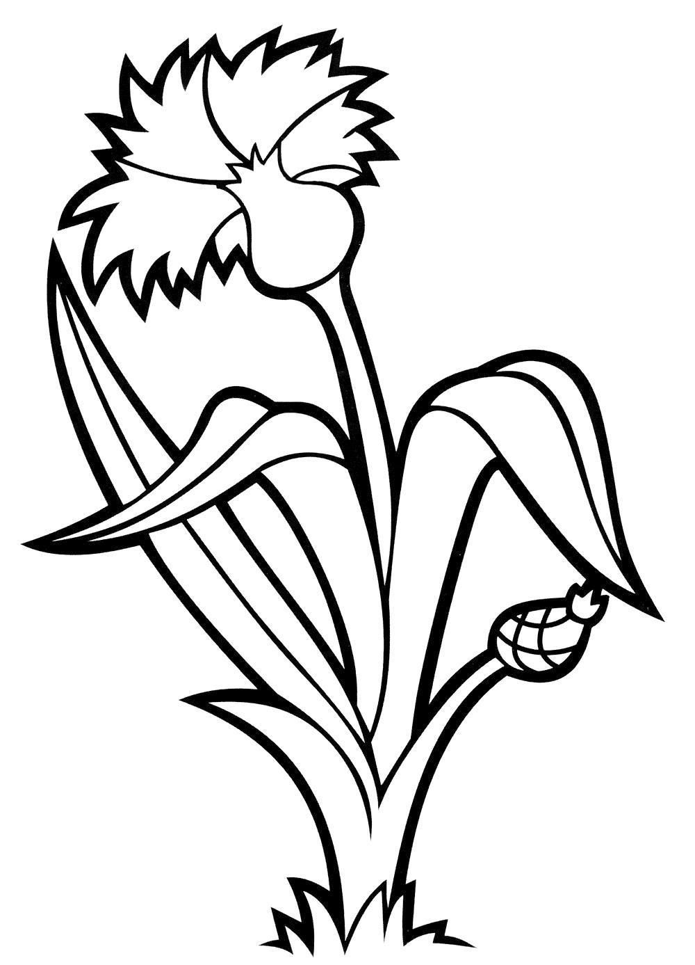 Полевые цветы Василек. Онлайн бесплатные раскраски цветыраскраски цветы