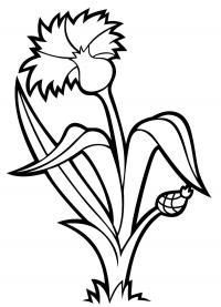 Василек. Скачать новые раскраски цветы