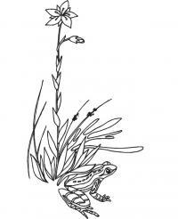 Лягушка рядом с цветком и травой Раскраски с цветами распечатать бесплатно
