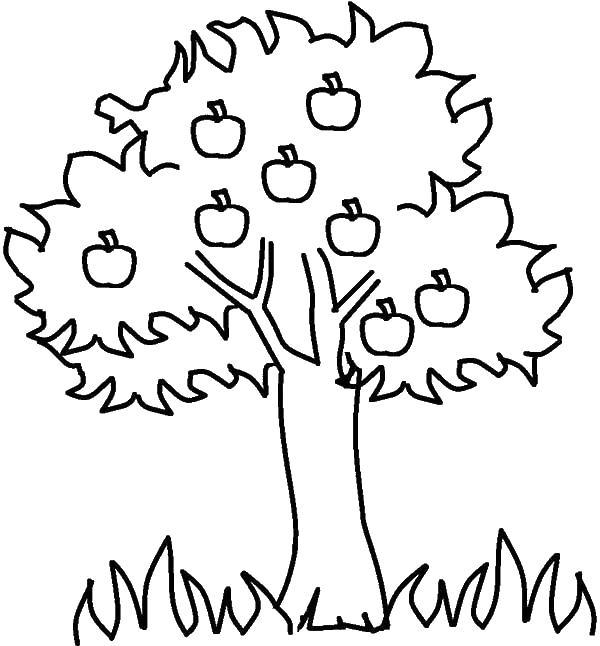 Яблоня с яблоками и снизу трава Раскраски цветочки для детей бесплатно