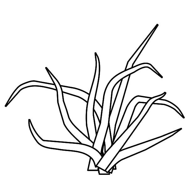 Трава Раскраски цветы для детей