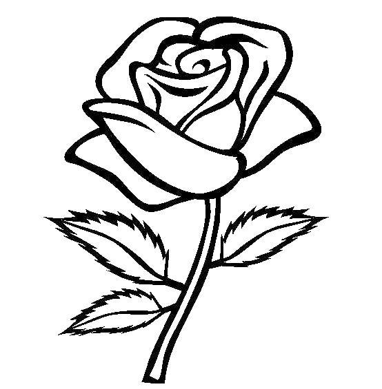 Роза Раскраски с цветами распечатать бесплатно