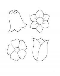 Контуры цветов Раскраски с цветами распечатать бесплатно