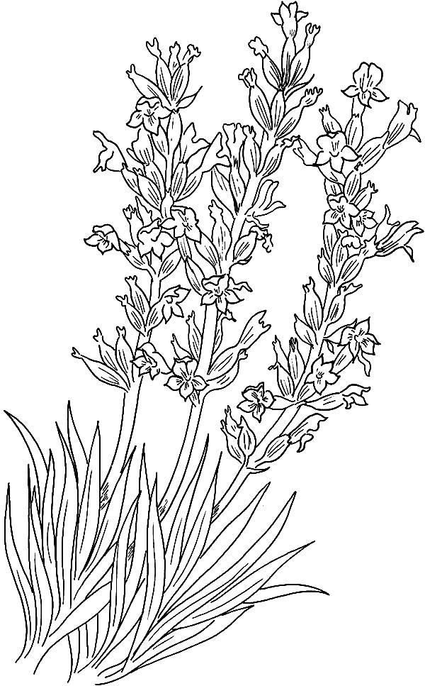 Трава и цветы Красивые раскраски цветов