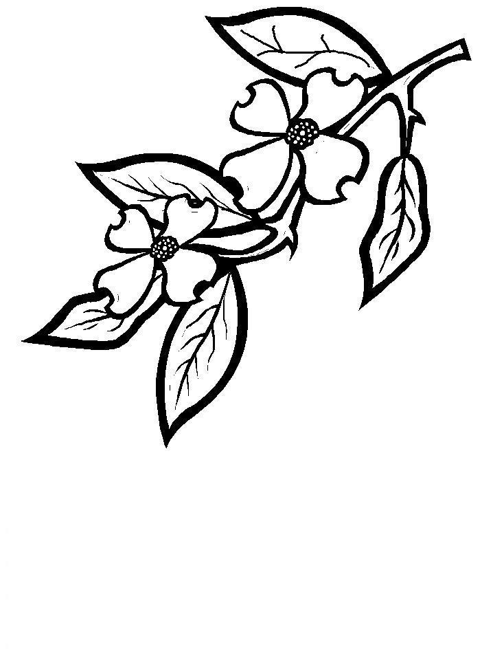 Ветка яблони с цветами Новые раскраски цветы
