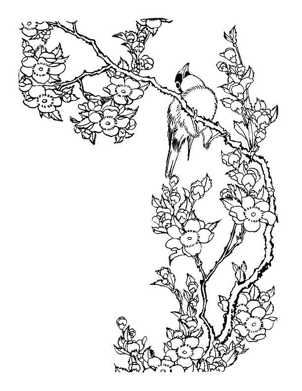 Цветущее дерево и скворец Новые раскраски цветы