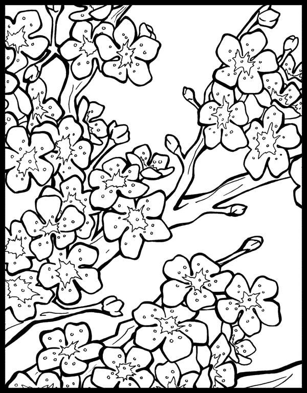 Дерево с почками и цветами Для детей онлайн раскраски с цветами