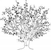 Большое цветущее дерево Новые раскраски цветы