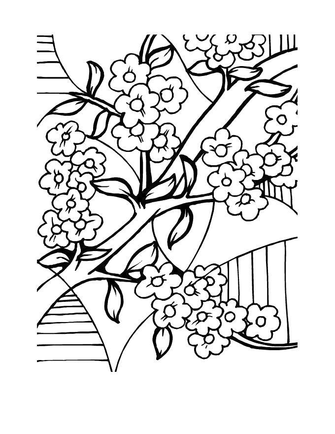 Ветка дерева цветет Новые раскраски цветы