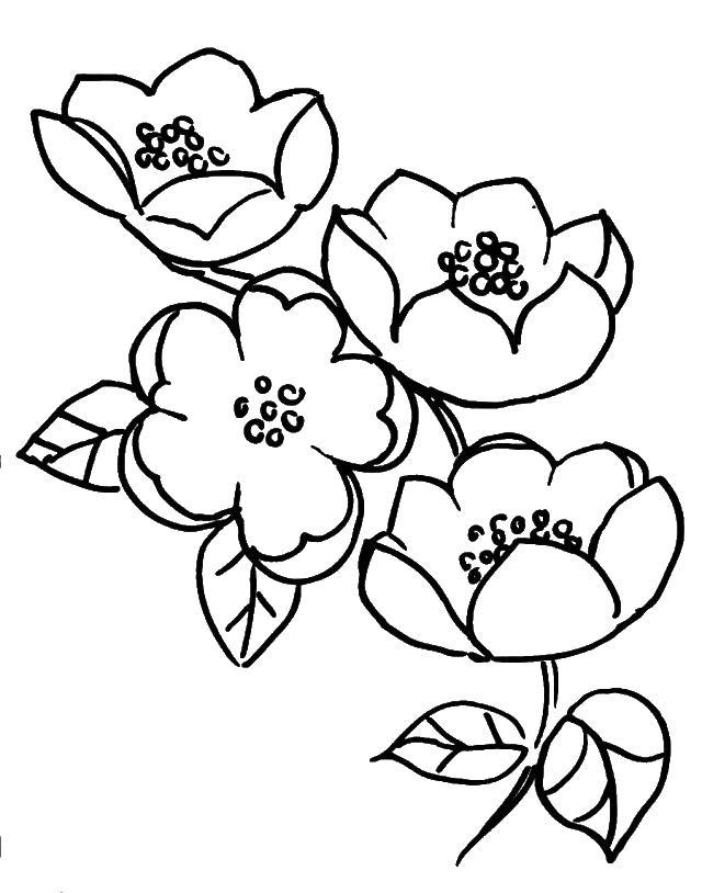Цветы Скачать и распечатать раскраски цветов бесплатно