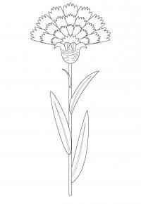 Василек раскраска Скачать новые раскраски цветы