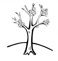 Весеннее дерево начало цветения Новые раскраски цветы