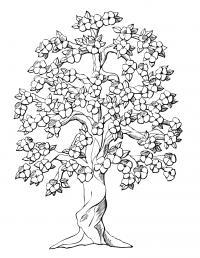 Дерево в цвету с закрученным стеблем Новые раскраски цветы