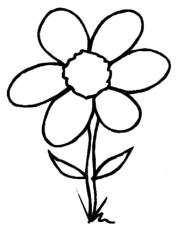 Полевой цветок Раскраски детские с цветами